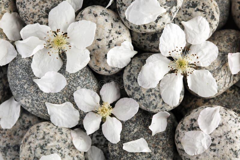 Glatte Steine mit den Blumenblättern stockfoto