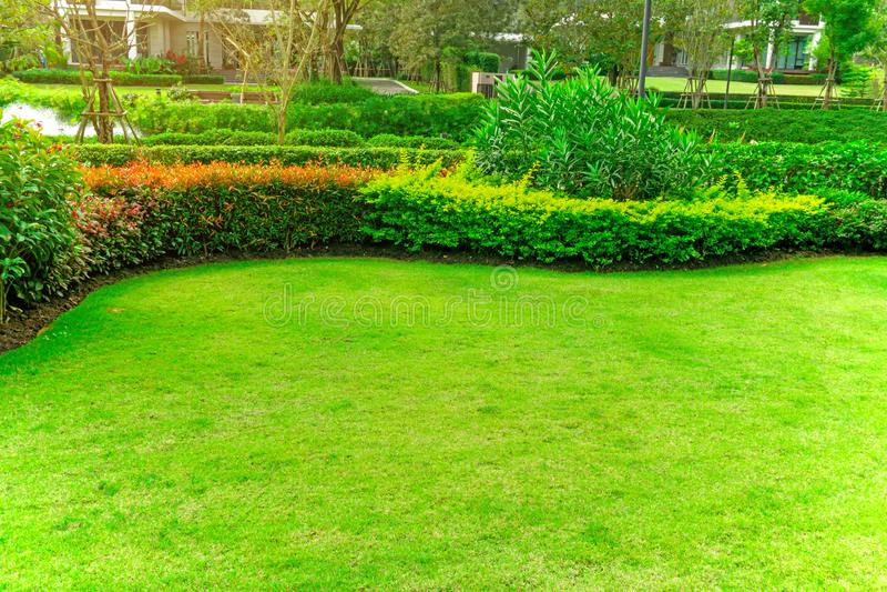Glatter Rasen frischen grünen Burmuda-Grases als Teppich mit Kurvenform des Busches, Bäume auf dem Hintergrund, gute mainternance lizenzfreie stockfotos