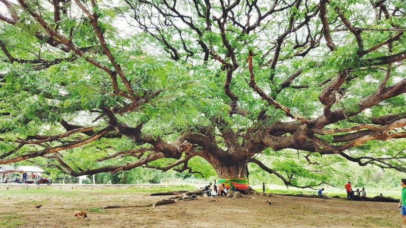 Glauben Sie Baum stockfoto