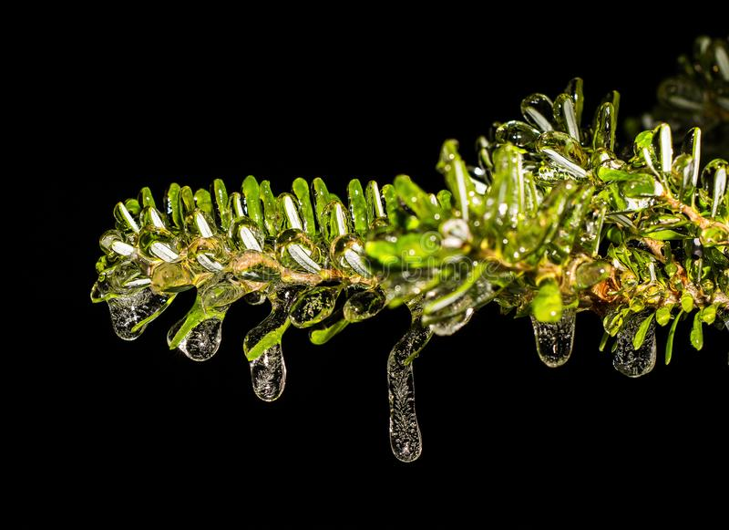 Glaze ice on plants after rain and strong winter stock photography