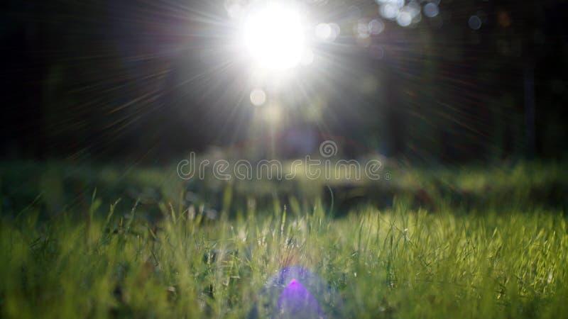 Gleam surpreendente da luz solar durante o por do sol com grama verde como o fundo da natureza largamente fotografia de stock royalty free