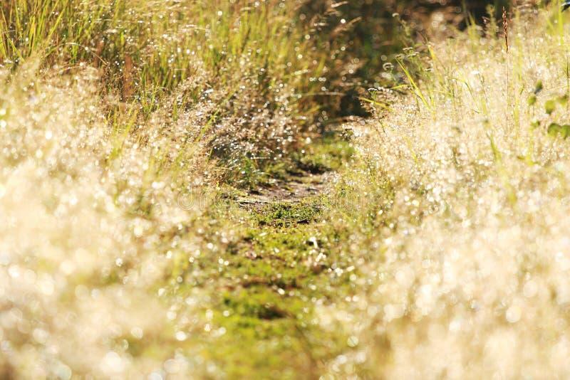 Gleamy trawa, footway i ranek rosa, obrazy stock