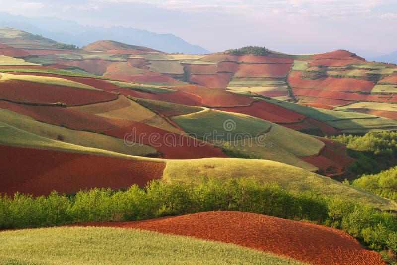 Download Glebe di colore immagine stock. Immagine di campo, agricoltura - 7318199
