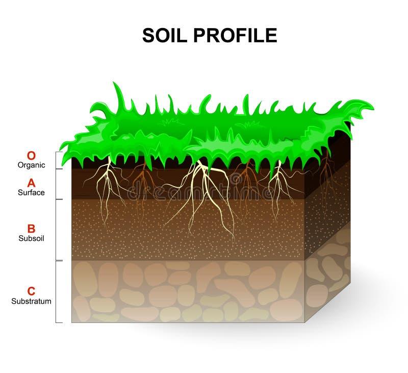 Glebowy profil ilustracji