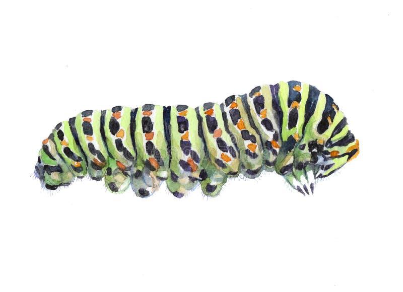Gleiskettenfahrzeug-Insektentier des Aquarells einzelnes stock abbildung