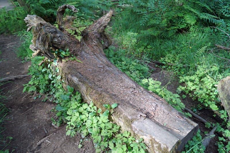 Glenariff Forest Park Waterfall Trail royalty-vrije stock foto
