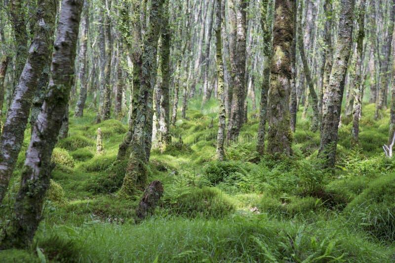 Glendalough photo libre de droits