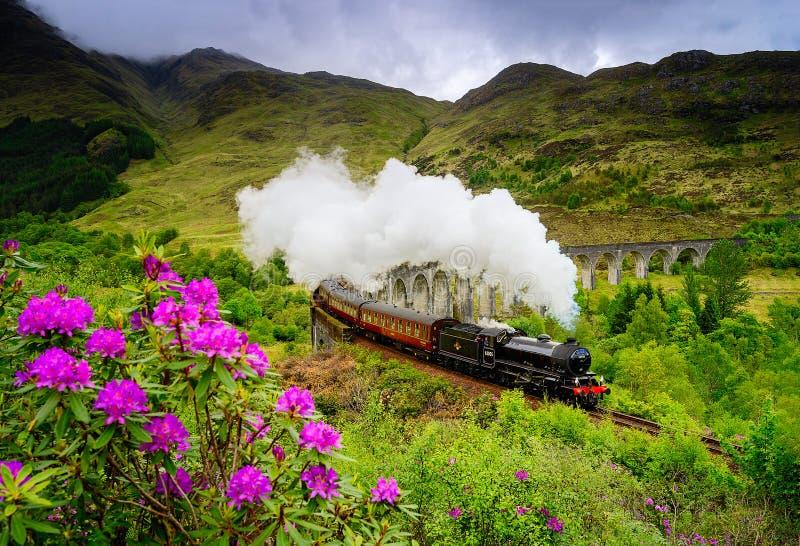 Glenfinnan铁路高架桥在有蒸汽火车的苏格兰在春天 库存照片