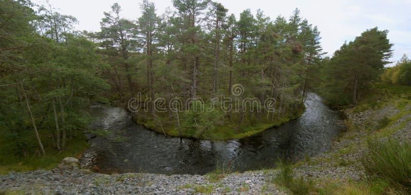 Glenmore Forest Park Scotland UK royaltyfria foton