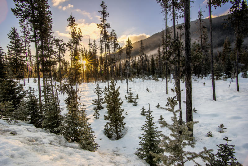 Gles skog i vinter med solstjärnan royaltyfri fotografi