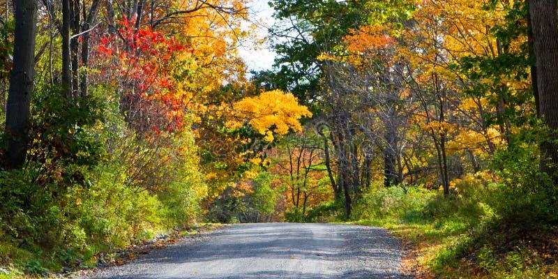 Glesbygdsområdeväg i höst royaltyfri fotografi