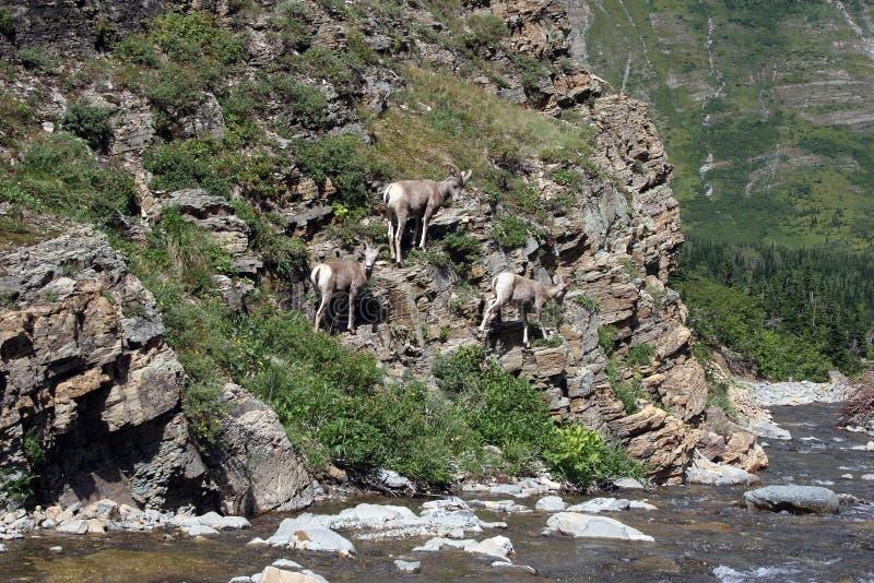 Gletscher-Nationalpark, Montana stockfotografie