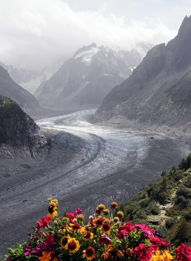 Gletsjer en bloemen royalty-vrije stock fotografie