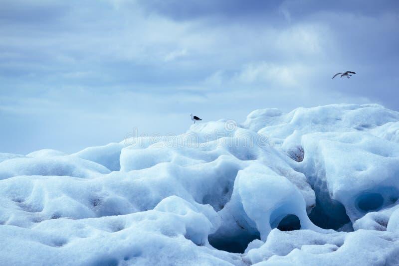 Gletsjerijsberg met zeemeeuwen ijsland stock afbeelding