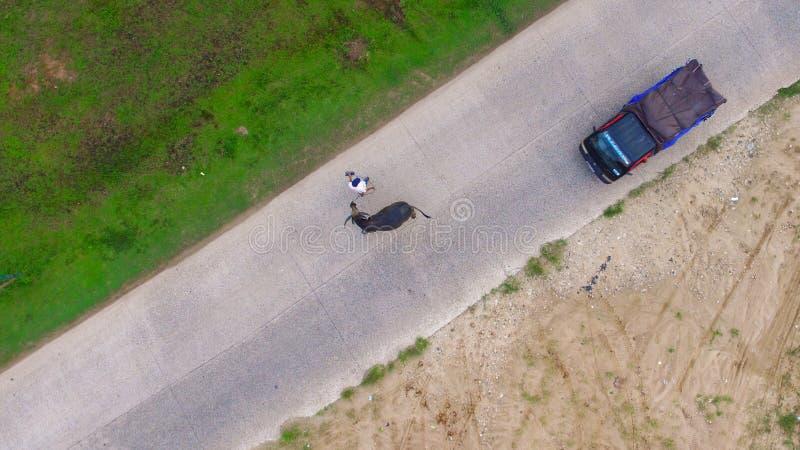 Gli agricoltori attraversano la strada con il bufalo fotografia stock