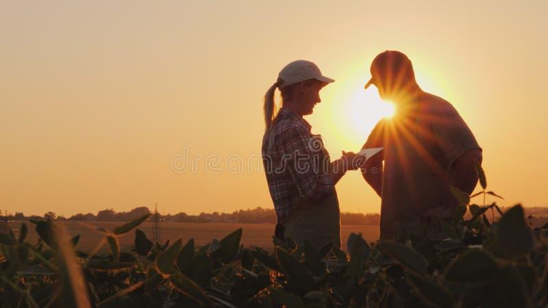Gli agricoltori equipaggiano e la donna comunica nel campo al tramonto Utilizzi una compressa fotografie stock libere da diritti