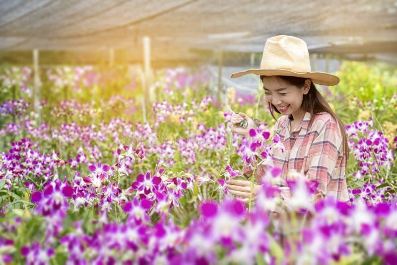 Gli agricoltori femminili felici stanno raccogliendo i fiori dell'orchidea da vendere Bella donna che lavora nell'azienda agricol immagini stock
