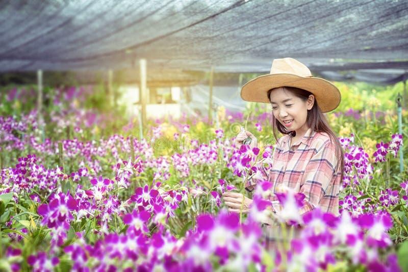 Gli agricoltori femminili felici stanno raccogliendo i fiori dell'orchidea da vendere Bella donna che lavora nell'azienda agricol fotografie stock libere da diritti