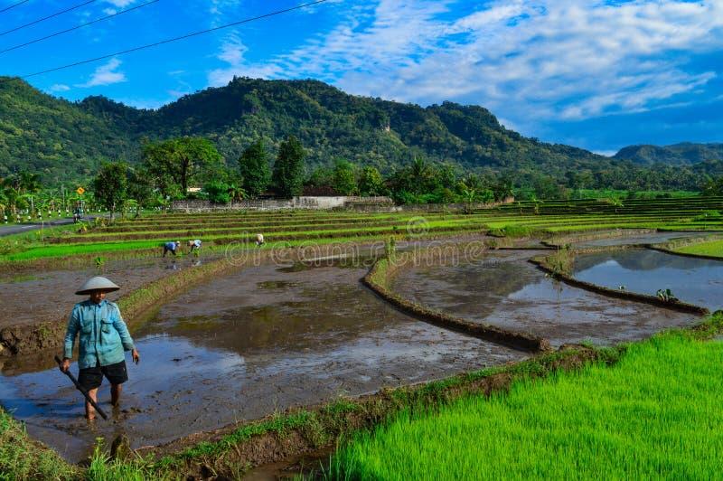 Gli agricoltori nel villaggio fotografia stock