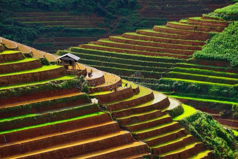 Gli agricoltori non identificati fanno il lavoro dell'agricoltura sui loro campi immagine stock libera da diritti