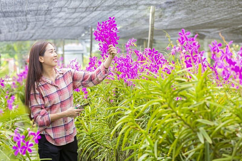 Gli agricoltori stanno ammirando la produzione del giardino floreale Giovane donna felice che cammina nella pianta dell'orchidea  immagine stock