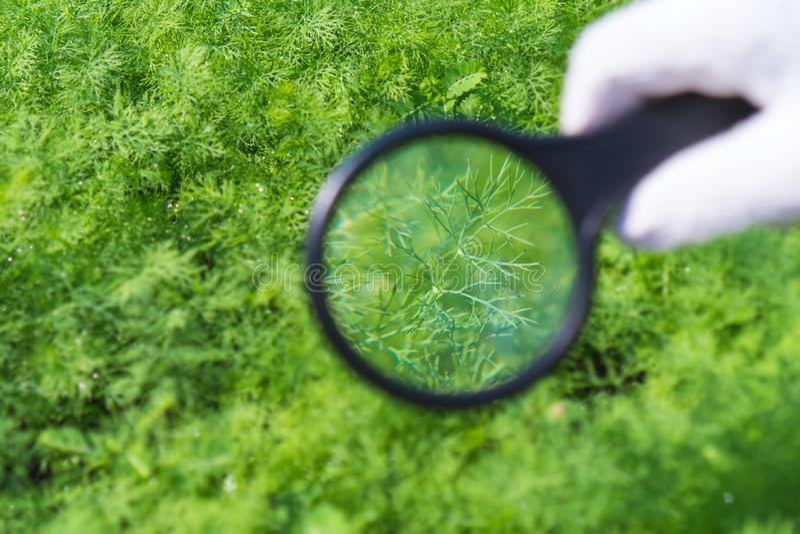 Gli agricoltori stanno controllando i parassiti in prodotti agricoli fotografia stock libera da diritti
