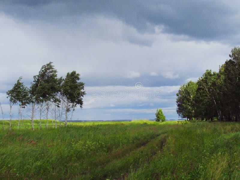 Gli alberi fotografia stock libera da diritti