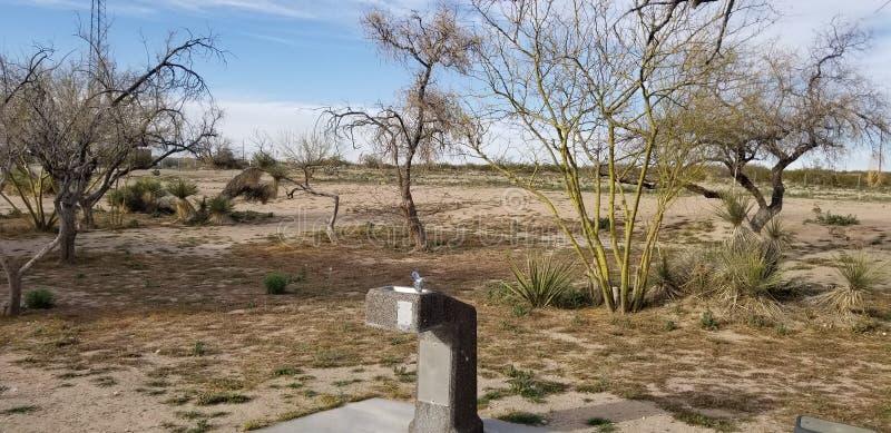 Gli alberi asciutti l'area di riposo Arizona immagine stock