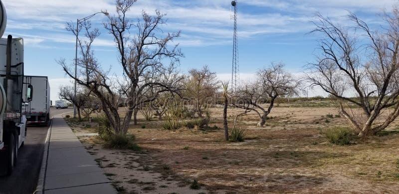 Gli alberi asciutti l'area di riposo Arizona fotografia stock