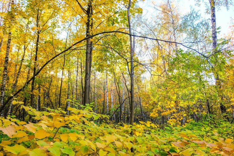 Gli alberi in autunno in Sokolniki parcheggiano a Mosca fotografia stock libera da diritti