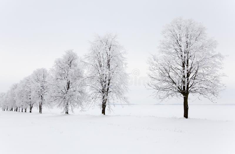 Stagione di inverno fotografia stock