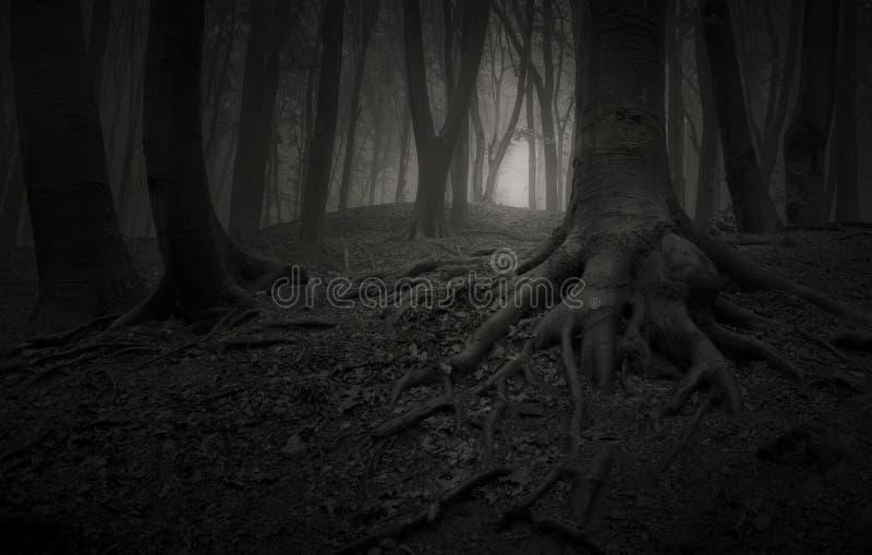 Gli alberi con le radici giganti nello scuro hanno frequentato la foresta fotografie stock libere da diritti