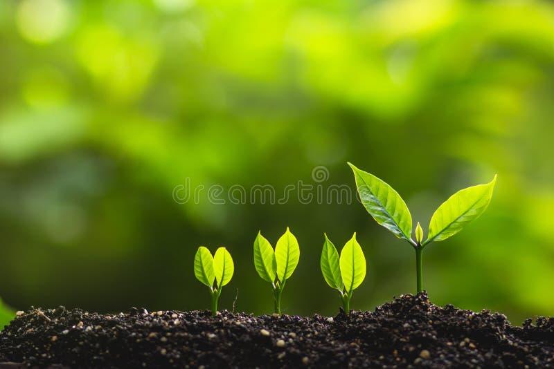 Gli alberi crescenti di piantagione di alberi del capo degli alberi conservano il concetto del mondo immagini stock