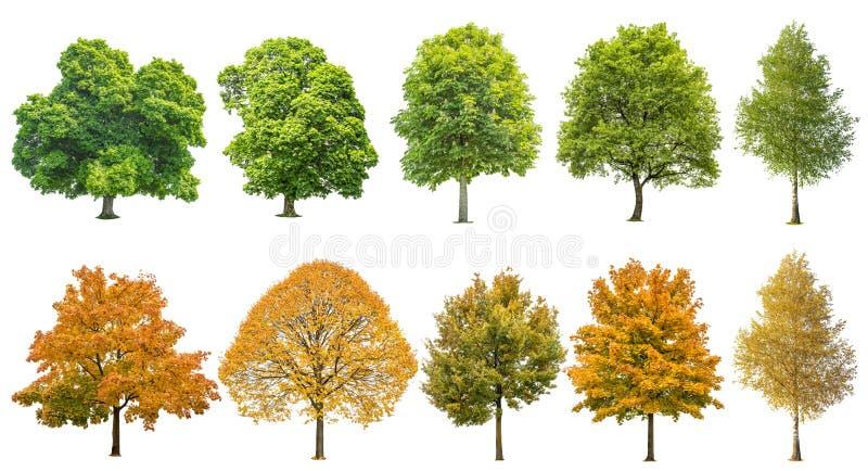 Gli alberi dell'estate di autunno hanno isolato il fondo bianco immagini stock libere da diritti