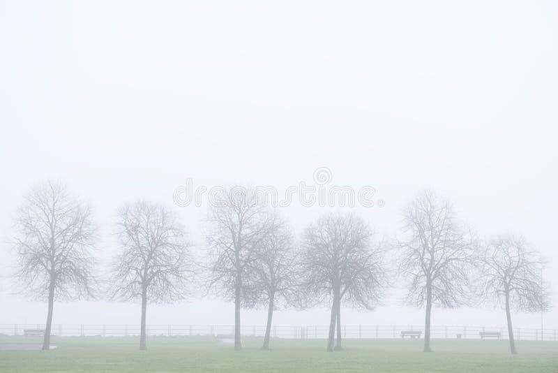 Gli alberi dell'inverno profilano in nebbia e cielo nebbioso fotografia stock