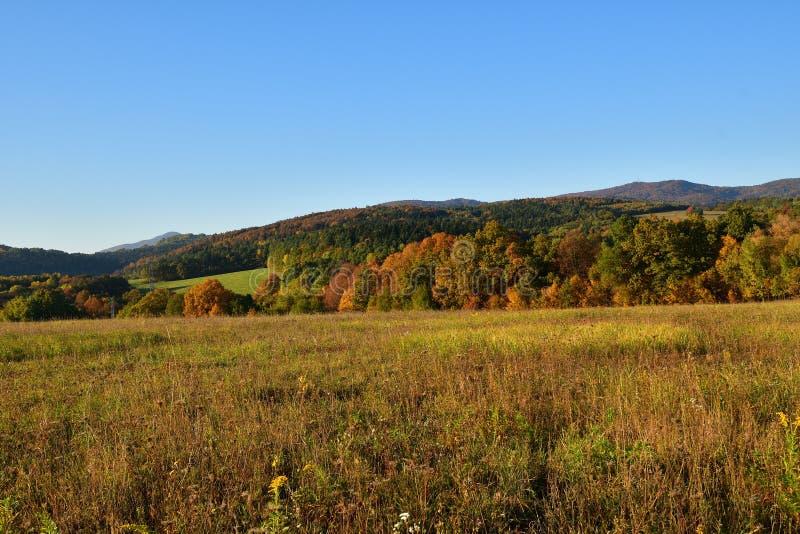 Gli alberi della natura in autunno colorati a colori abbellisce fotografia stock libera da diritti