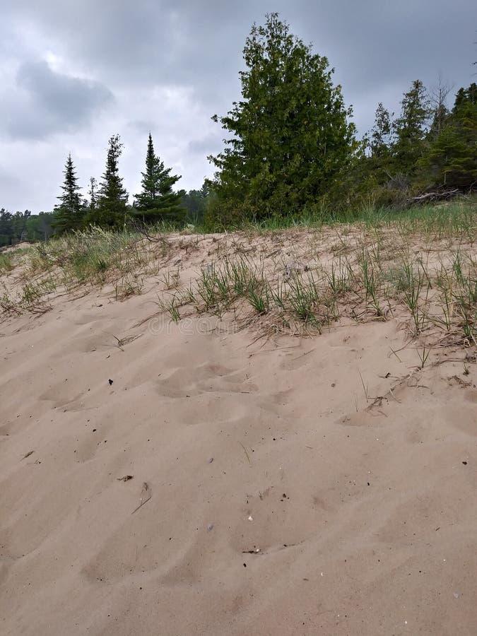 Gli alberi della spiaggia di sabbia delle dune imbussola il rilassamento costiero di viaggio della natura fotografia stock