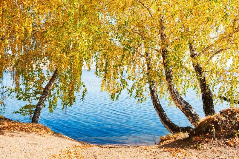 Gli alberi di autunno con giallo rimane l'acqua fotografie stock libere da diritti