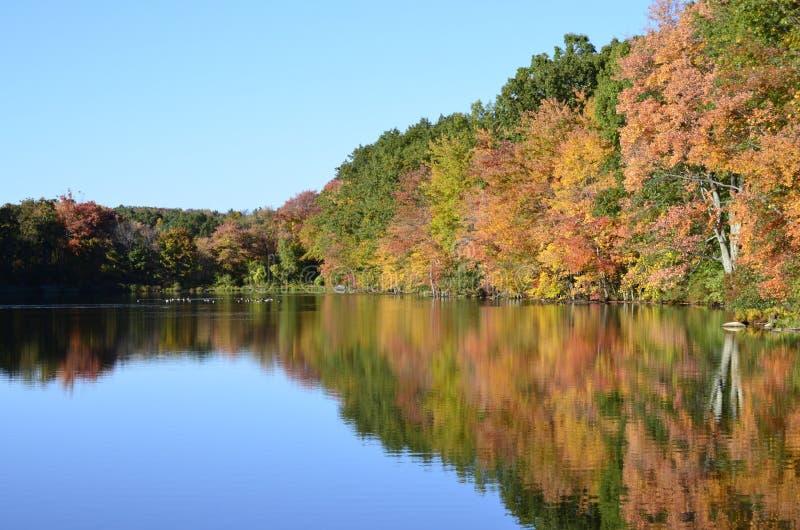 Gli alberi di autunno vicino allo stagno con il germano reale ducks, oche del Canada sulla riflessione dell'acqua fotografia stock libera da diritti
