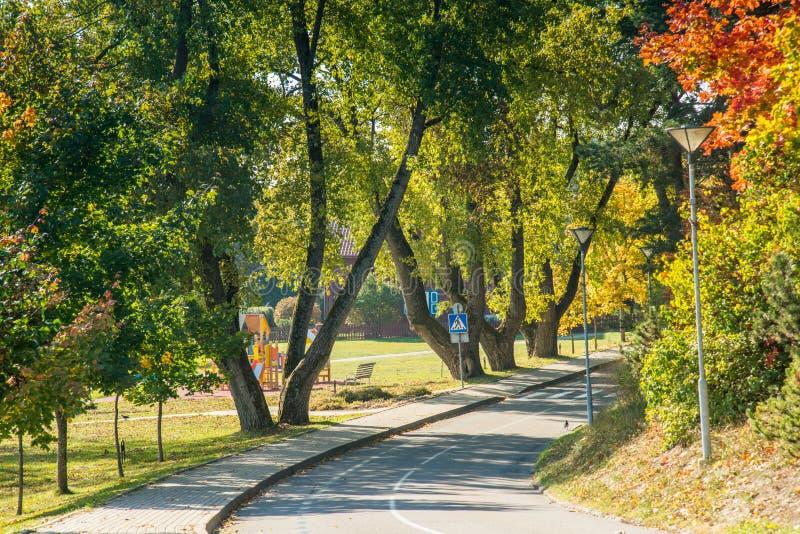 Gli alberi di caduta e della strada asfaltata fotografie stock libere da diritti