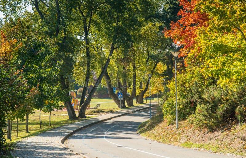 Gli alberi di caduta e della strada asfaltata fotografia stock