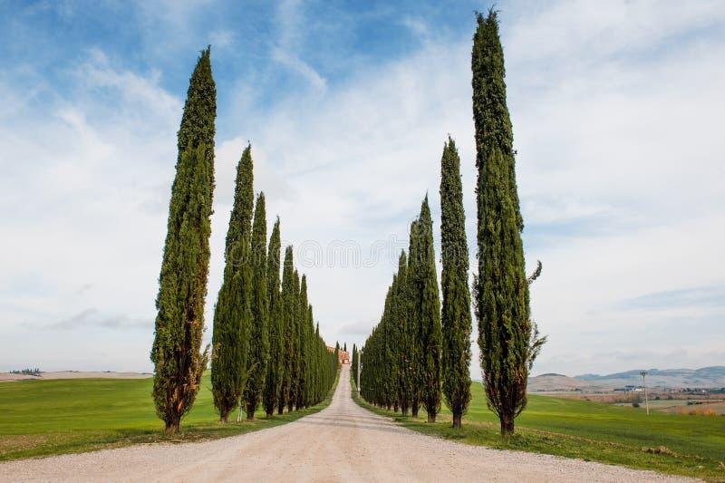 Gli alberi di Cypress remano e strada nel paesaggio toscano, Toscana, Italia fotografie stock libere da diritti