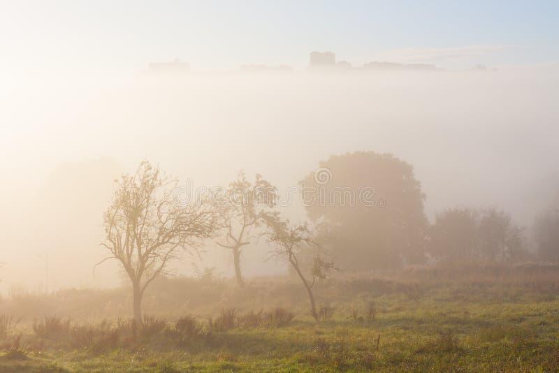 Gli alberi di mattina annebbiano e una siluetta di Oviedo fotografia stock libera da diritti
