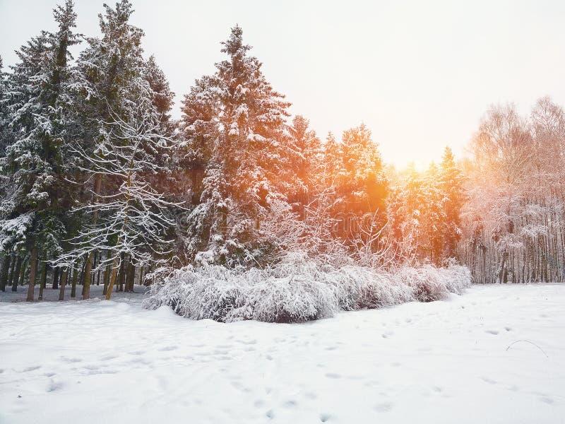 Gli alberi di Natale coperti di neve nella città parcheggiano immagini stock libere da diritti
