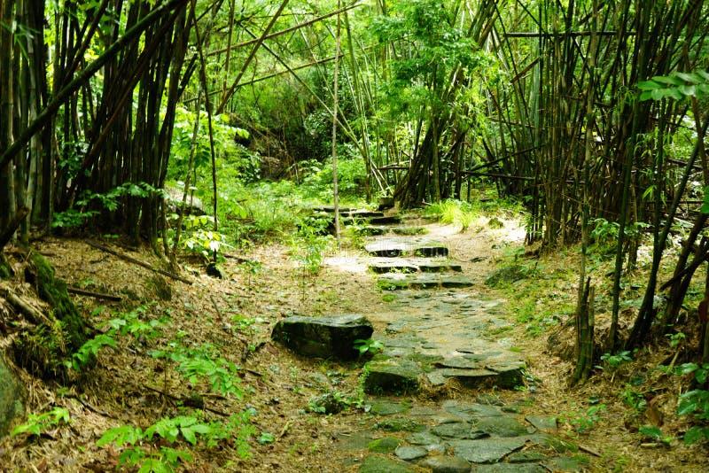 Gli alberi forestali del sole Scena all'aperto pacifica - legno selvaggio n fotografia stock libera da diritti