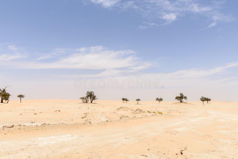 Gli alberi fra le dune di sabbia in Al-Khali dello sfregamento abbandonano (l'Oman) fotografia stock libera da diritti