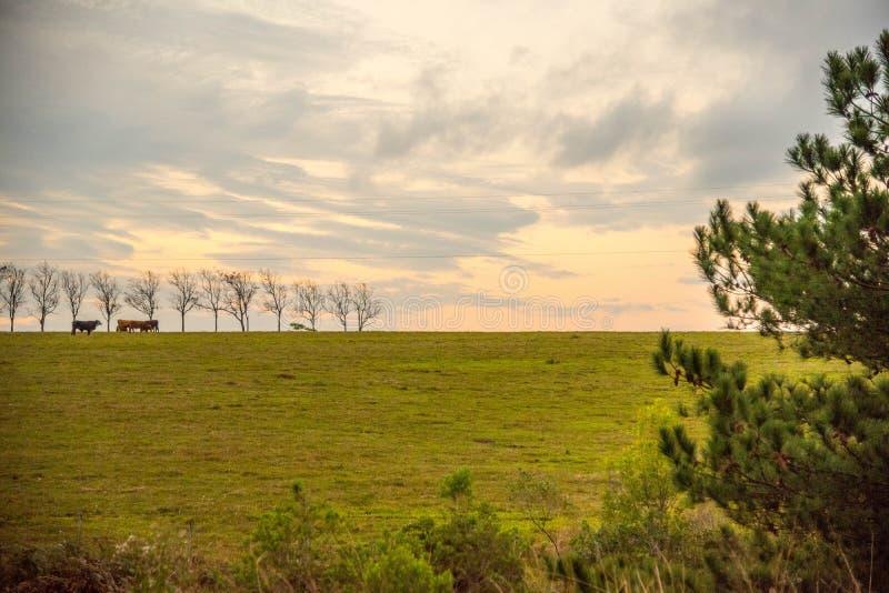 Gli alberi gialli 9 del ipÊS fotografia stock libera da diritti