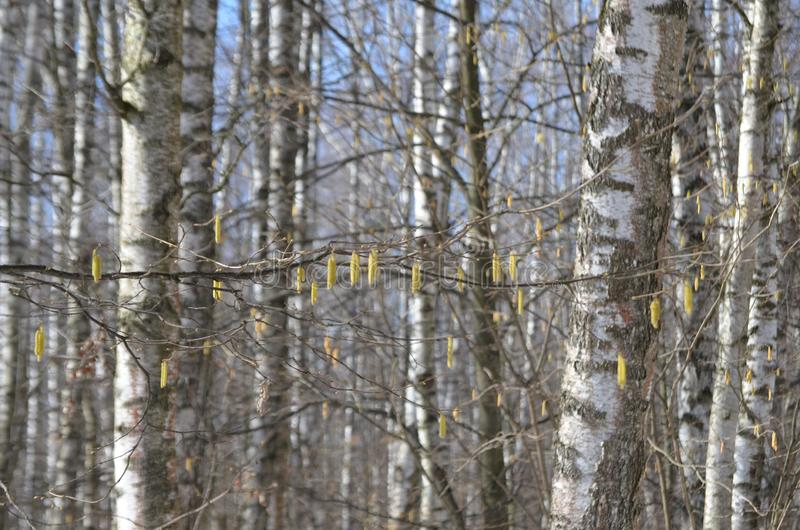 Gli alberi hanno loro proprie decorazioni fotografie stock libere da diritti
