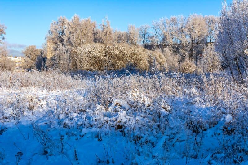 Gli alberi nel parco sono coperti di gelo immagine stock libera da diritti