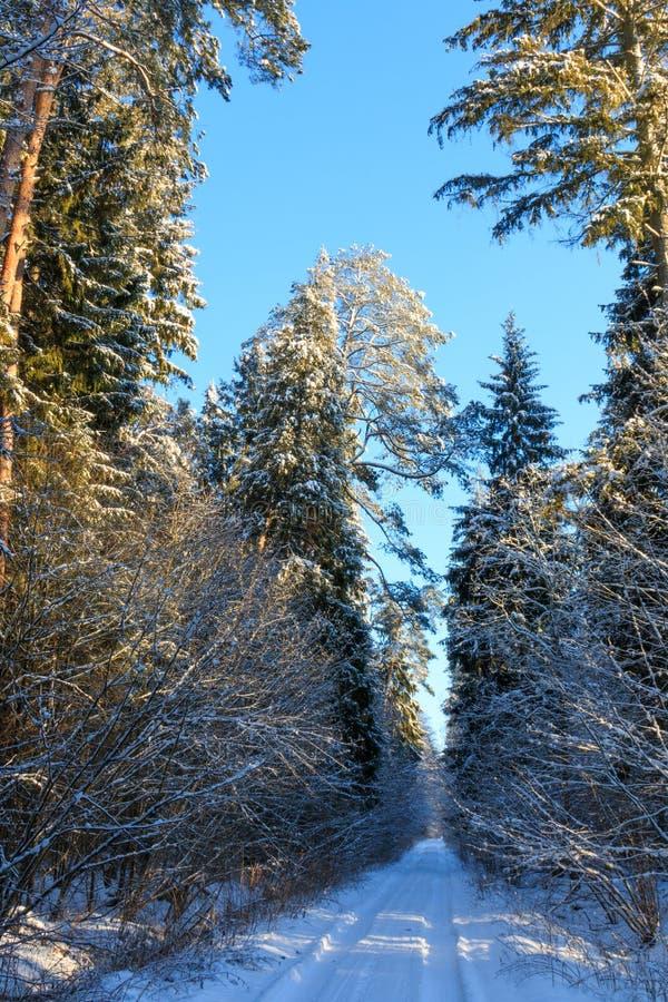 Gli alberi nevicano bufera di neve avvolta dopo sopra la strada a terra fotografia stock libera da diritti